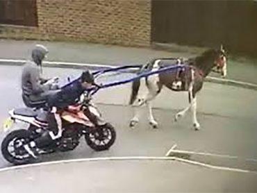 Motorfiets gestolen door paard